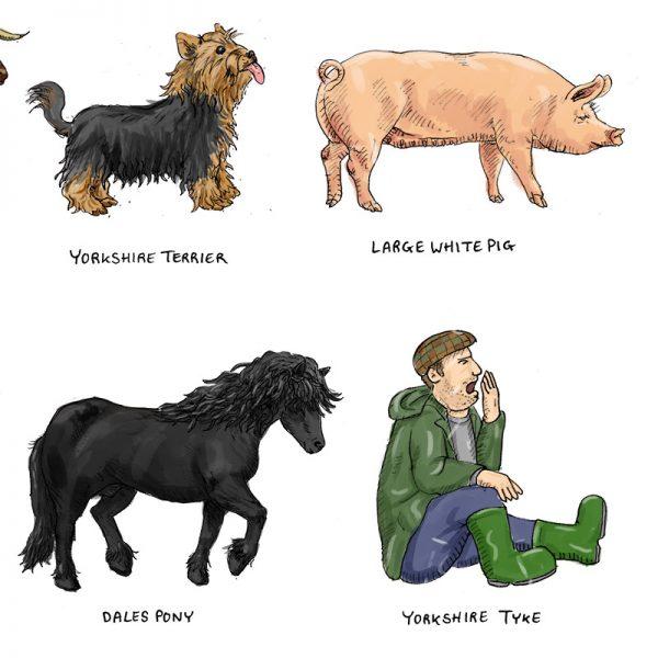 Yorkshire breeds illustration - detail