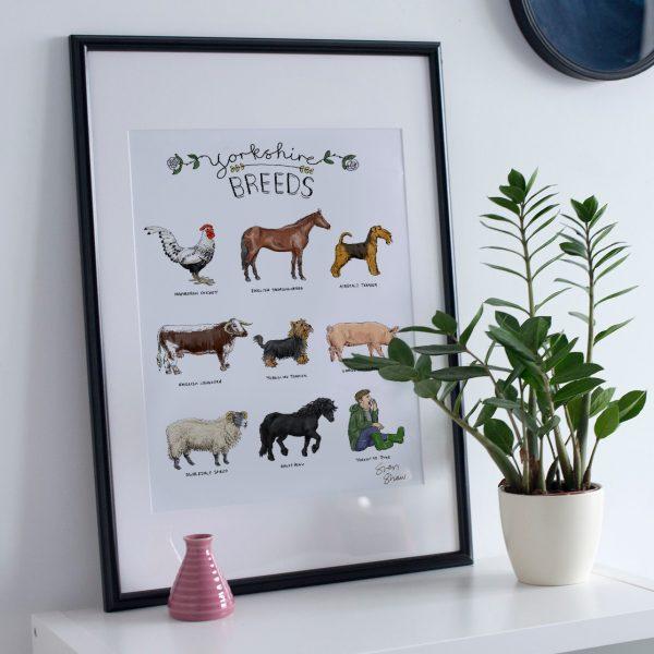 Yorkshire breeds illustration framed