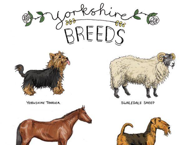 Yorkshire breeds tea towel 2