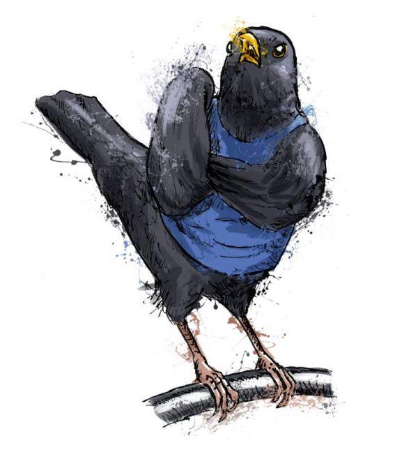 British birds - blackbird