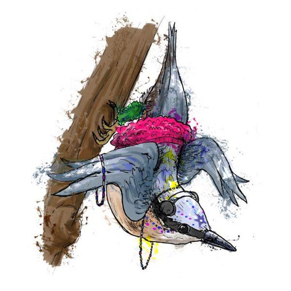 British birds - nuthatch