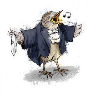 British birds - wren